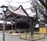 2009yasukuni_sakura_0320_2
