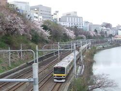 2010sakura_sotoborikouen