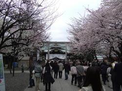 2010sakura_yasukuni