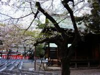 Sakura_hyohonboku