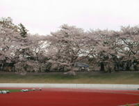 Sakura_musashino_ground