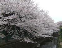 Shirakogawa