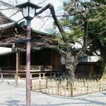 Yasukuni_sakura_323_2